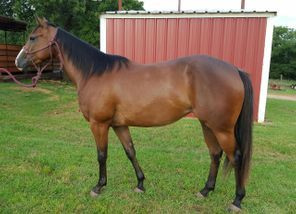 horses for sale, champion horses for sale, barrel horses for sale, barrel racing horses for sale, buy a horse, buy a champion horse, buy a horse near me,, sharin hall horses