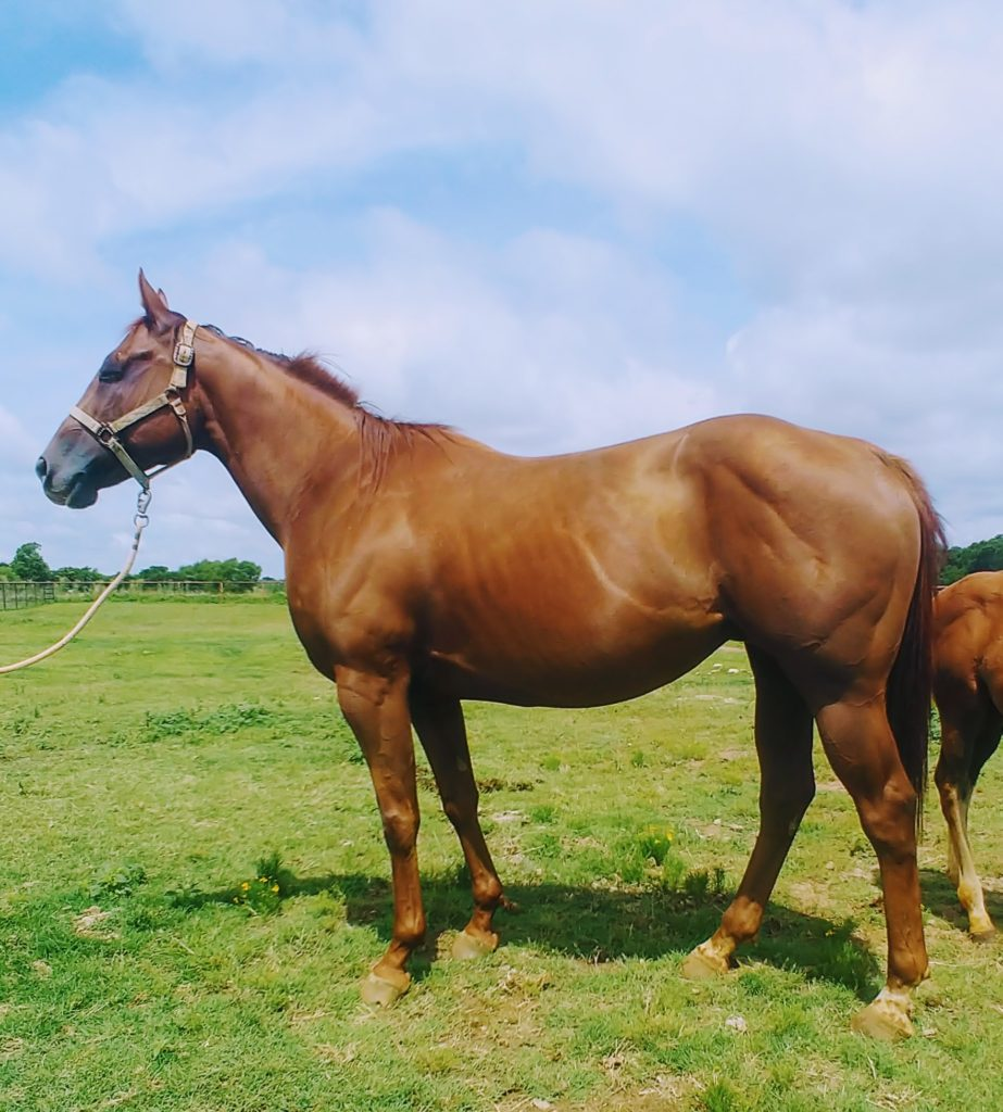 Farrtreeous JK Hores For Sale or Breeding